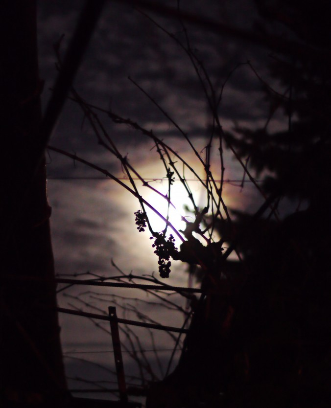 mesiac a paberok